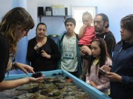 Instalan en Valparaíso acuario interactivo que será el primero de una eventual red nacional