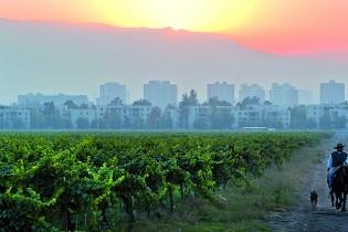 Viña Cousiño Macul inicia evaluación ambiental de nuevo proyecto inmobiliario