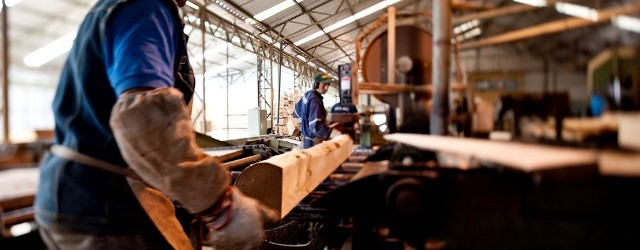 Mercado proyecta alza en demanda de madera tras recientes huracanes