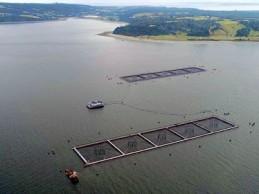 SMA solicita al Tribunal Ambiental autorización para detener centro de cultivo de Marine Harvest
